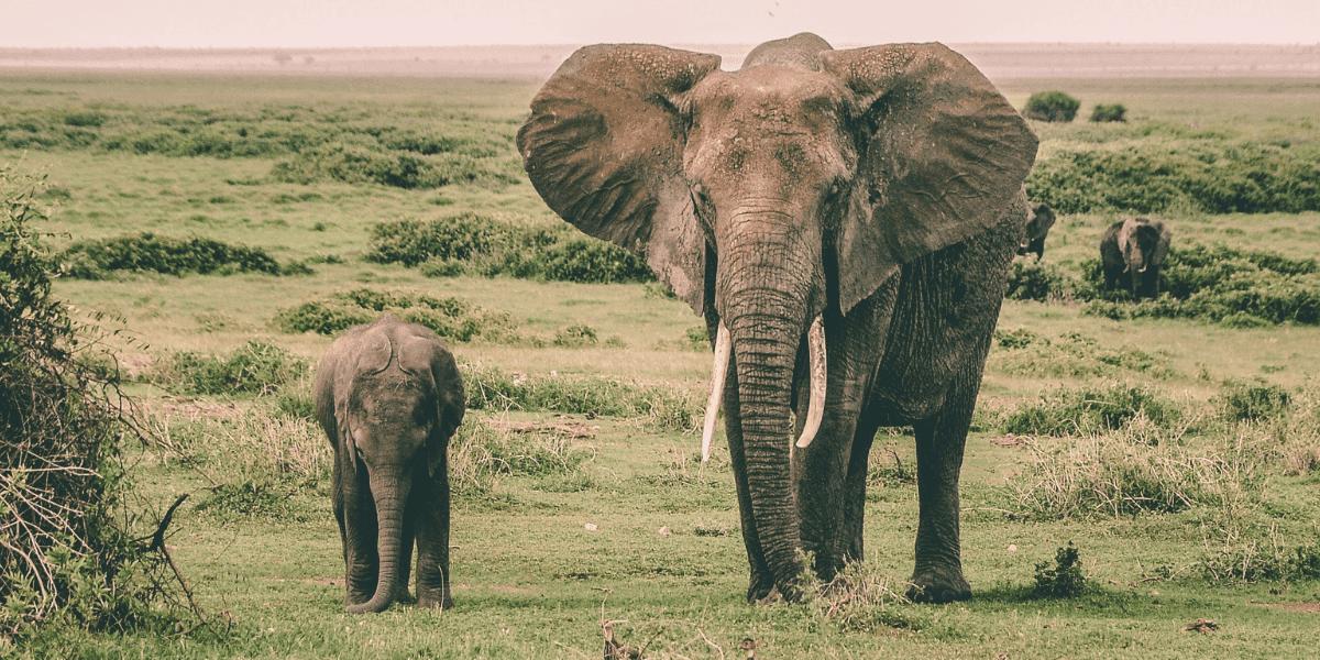 elefanten blogimage