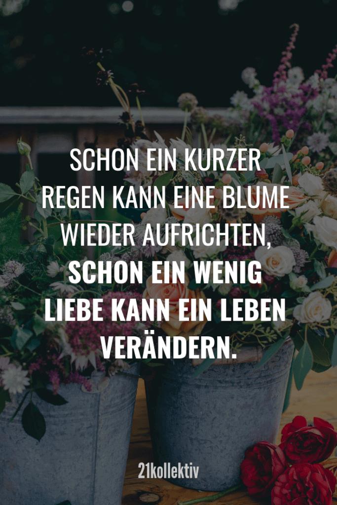 Schon ein kurzer Regen kann eine Blume wieder aufrichten, schon ein wenig Liebe kann ein Leben verändern.