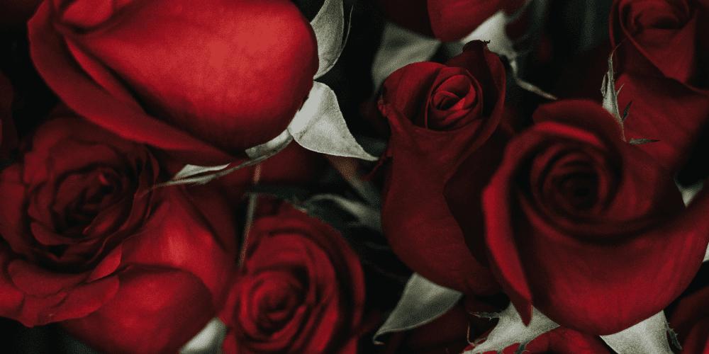 Was bedeuten Rote Rosen? Finde es auf unserem Blog heraus!